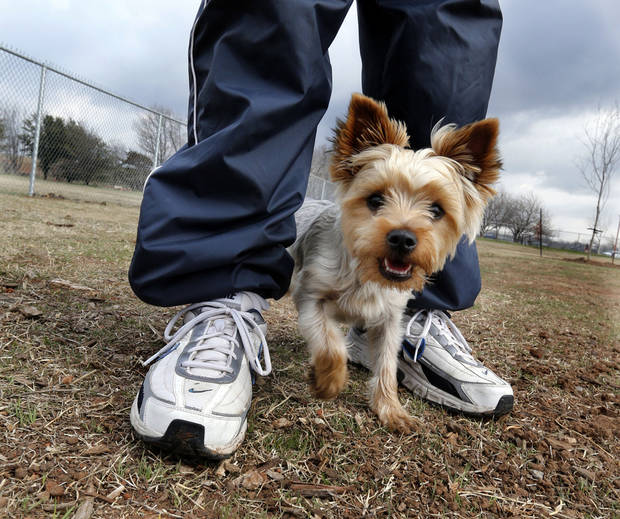Left: Tim Cooter�s Yorkshire terrier Watson takes a walk in the newly expanded dog park at 12th Avenue NE and Robinson Street in Norman. PHOTO BY STEVE SISNEY, THE OKLAHOMAN