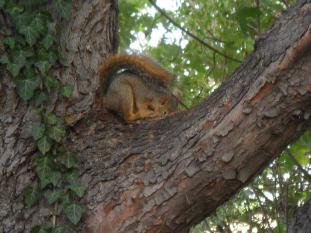 It\'s too Hot when a squirrel needs a nap