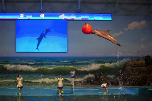 In this Sept. 8, 2012 photo, a dolphin leaps from a tank during a show at a newly-built amusement park in Pyongyang, North Korea. (AP Photo/David Guttenfelder)