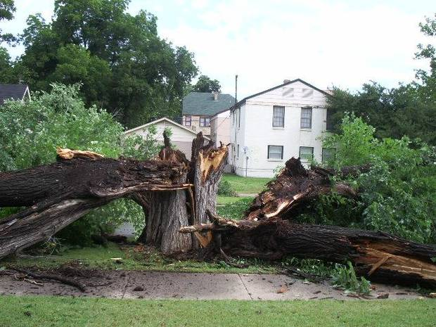 Tree disintegrates at 24th and Arbor in OKC