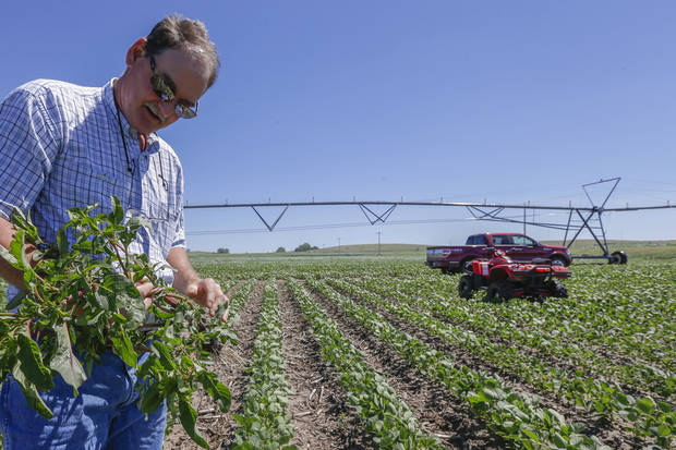 Jim Carlson pulls a pigweed plant from his field of soy beans in Silver Creek, north of Osceola, Neb. The route of the proposed Keystone XL pipeline runs through this field. AP PHOTO <strong>Nati Harnik - AP</strong>