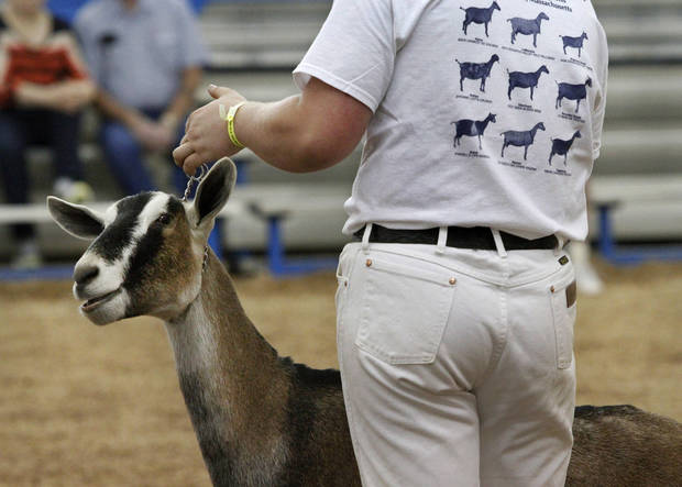 A teen shows his goat during goat judging at the Oklahoma State Fair on Wednesday, Sep. 19, 2012.  Photo by Jim Beckel, The Oklahoman.