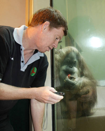 Orangutan conservationist Ian Singleton gets a close look at one of the orangutans at the Oklahoma City Zoo.  By Paul Hellstern, The Oklahoman <strong>PAUL HELLSTERN - Oklahoman</strong>