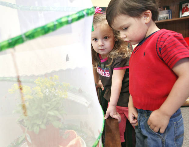 Reagan Oltmanns, 3, left, and John Moss, 3, watch butterflies at First Christian Church in Yukon. The church hopes to release the butterflies on Easter. PHOTO BY JOHN CLANTON, THE OKLAHOMAN