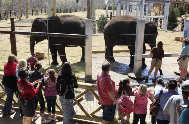Zoo visitors looking at Asha and Chandra after the afternoon elephant show at the Oklahoma City Zoo in Oklahoma City Wednesday, March 16, 2011. Photo by Paul B. Southerland, The Oklahoman