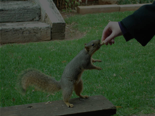 feeding the squirrel this past winter