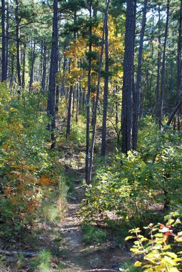 The Ouachita Trail begins its eastward journey through the piney woods of Talimena State Park. PHOTO BY LARRY FLOYD
