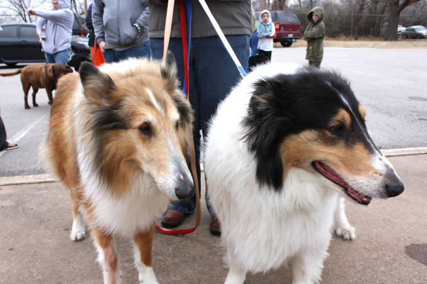 Kara Maryesky keeps her collies, Connor, left, and Gaylen, on leashes while she waits for services Saturday at a pet clinic in Norman.
