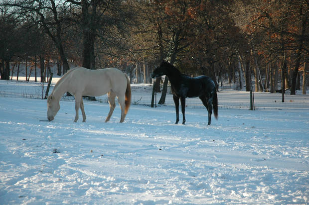 Our horses Ruby and Jet playing in the snow<br/><b>Community Photo By:</b> Dan Bradley<br/><b>Submitted By:</b> Dan, Harrah