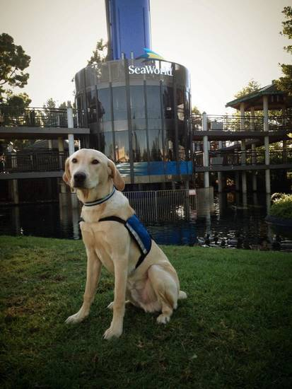 On Sunday, Memphis went with his trainer to SeaWorld San Diego for publc access behavior training. Once he completes his training, Memphis will be brought to Oklahoma to serve as Kaleigh's service dog. Photo provided <strong></strong>