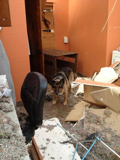 A dog stands in the wreckage of its home in Woodward, Okla. Its owner was present and survived the storm. Photo by Michael Kimball, The Oklahoman, April 15, 2012.