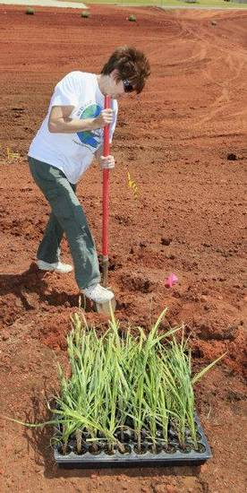 Volunteer Trudi Logan, Tinker Air Force Base environmental management division, digs holes for students to plant native aquatic plants in the wetlands outdoor classroom under construction at Deer Creek Grove Valley Elementary School. PHOTO BY PAUL B. SOUTHERLAND, THE OKLAHOMAN <strong>PAUL B. SOUTHERLAND - PAUL B. SOUTHERLAND</strong>