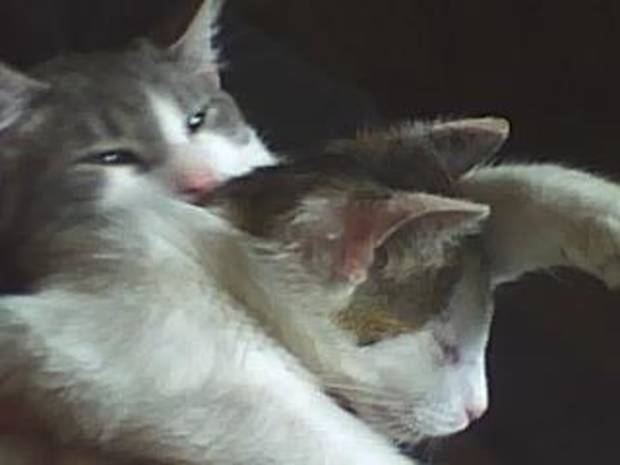 Tom is giving Cierra a bath so they can take an afternoon nap and stay up all night..<br/><b>Community Photo By:</b> tama<br/><b>Submitted By:</b> Tama, Midwest