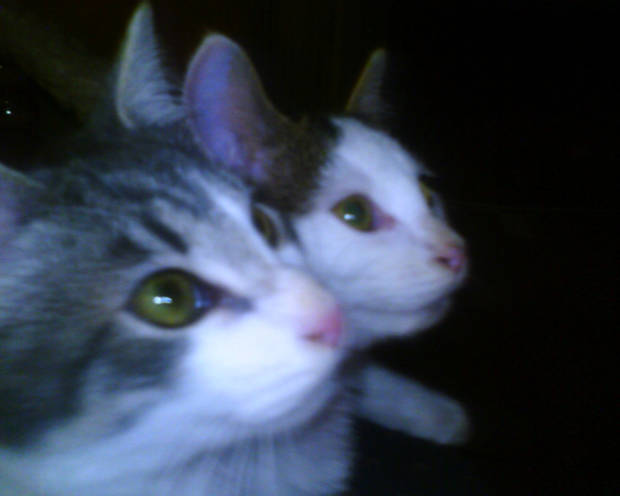 seeing double Cierra and Tomtom<br/><b>Community Photo By:</b> Tama<br/><b>Submitted By:</b> Tama, Midwest