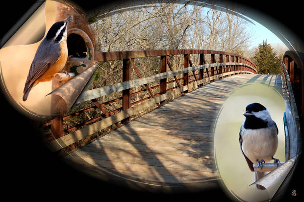 A Collage from Martin nature Center.<br/><b>Community Photo By:</b> Eldon Harris<br/><b>Submitted By:</b> Eldon, Bethany