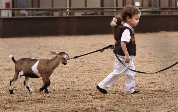 Paul Goodchild, 4, of Norman, leads Emmy, his Nigerian Dwarf goat after showing her in the three to six month class during goat judging at the Oklahoma State Fair on Wednesday, Sep. 19, 2012. This is Goodchild's first time to show an animal at the state fair. Emmy won a second place ribbon; Paul was awarded a first place ribbon for showmanship.  Photo by Jim Beckel, The Oklahoman.