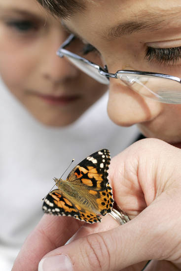 L to R - Brian Varva, 8, and Mason Gregg, 8, get a close look at one of the butterflies Wed. April 8, 2009 that will be released from the North lawn of McFarlin United Methodist church in Norman, OK. Photo by Jaconna Aguirre, The Oklahoman