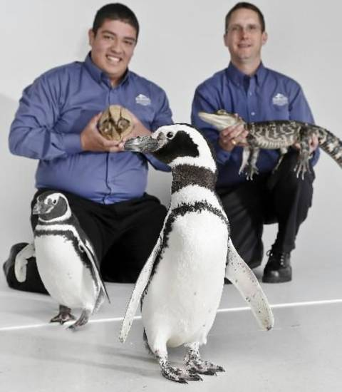 SeaWorld animal ambassadors Clay Carabajal and Jason Baca, from left, pose for a photo with a Three Banded Armadillo, Wilson, American Alligator, Rocky, and Magellanic Penguin's Penny and Pete on a visit to the OPUBCO office from SeaWorld on Thursday, Feb. 21, 2013, in Oklahoma City, Okla. Photo by Chris Landsberger, The Oklahoman