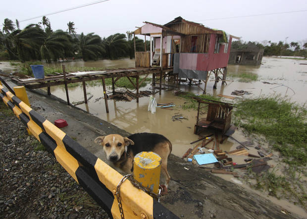 A dog is chained near a damaged house after Typhoon Bopha made a landfall in Compostela Valley in southeastern Philippines Tuesday Dec. 4, 2012. A Philippine governor says at least 33 villagers and soldiers have drowned when torrents of water dumped by the powerful typhoon rushed down a mountain, engulfing the victims and bringing the death toll from the storm to about 40. (AP Photo/Karlos Manlupig)