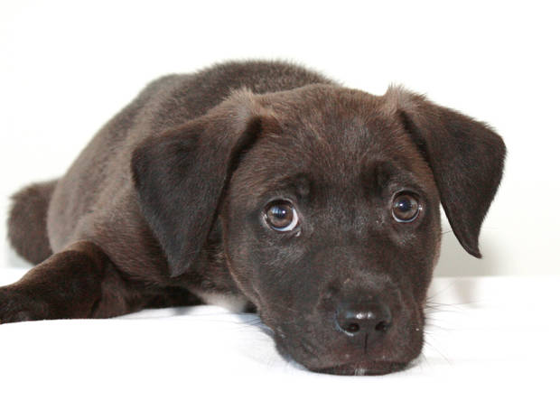 Foster volunteers are needed for a new program designed to keep puppies in homes instead of the shelter. PHOTOS PROVIDED BY CITY OF EDMOND