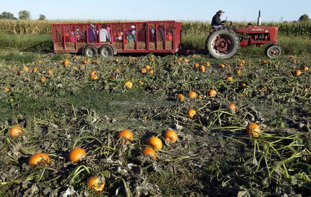 A tractor pulls a wagon full of visitors to the Tuttle Orchards, in Greenfield, Ind., where they picked pumpkins from one of the orchards pumpkin patches Monday. AP Photo <strong>Michael Conroy</strong>