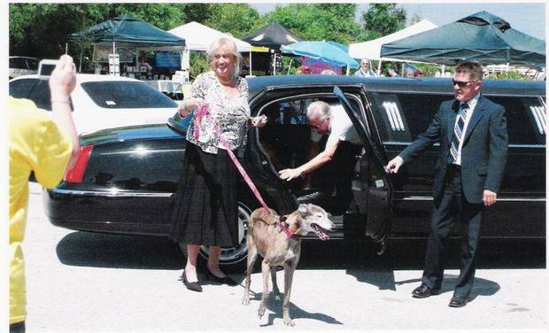 20-year-old greyhound Genie gets out of a limousine with owner Neena Derf at Tampa Bay&#039;s annual ?Run with the Big Dogs? Poker Run. Photo provided. &lt;strong&gt;&lt;/strong&gt;