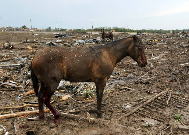 Horses stand among debris north of SW 149th and east of Western after a tornado struck south Oklahoma City and Moore, Okla., Monday, May 20, 2013. Photo by Nate Billings, The Oklahoman