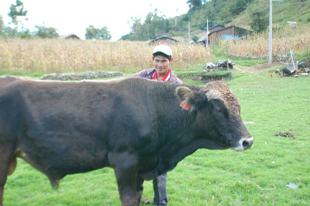A man tends to cattle in Peru, a South American country where World Neighbors helps farmers experiment with different crops, promote self-financing and create local credit, savings and investment programs, among others. <strong> - World Neighbors</strong>