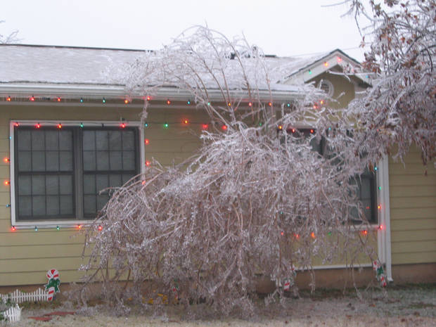 Oh no! My tree is falling!<br/><b>Community Photo By:</b> jenny<br/><b>Submitted By:</b> jenny, tinker afb