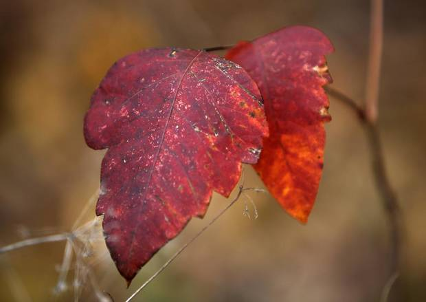 Fall leaves at Fink Park in Edmond, Okla., Saturday, Nov. 10, 2012.  Photo by Garett Fisbeck, The Oklahoman