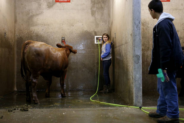 Kylee Henderson, 13, talks with Luke White, 12, of Checotah,  after washing her heifer, Nicole,  on Saturday during the Oklahoma Youth Expo.