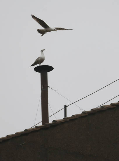 A seagull sits on the chimney on the roof of the Sistine Chapel while another flies overhead in St. Peter's Square during the second day of the conclave to elect a new pope at the Vatican, Wednesday, March 13, 2013. (AP Photo/Dmitry Lovetsky) ORG XMIT: VAT527
