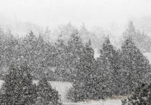 A heavy snow falls in north Oklahoma City, OK, Tuesday, February 12, 2013, By Paul Hellstern