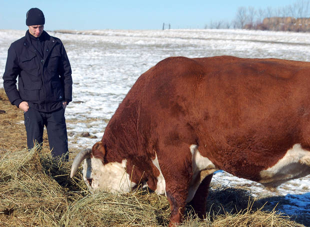 In this Nov. 15, 2012 photo Viktor Kapinus inspects a Hereford bull on the Helbling Hereford Ranch near Mandan, N.D. The 21-year-old was one of several young Kazahk cattlemen who toured North Dakota ranches and got cattle-tending tips from veteran cowboys. (AP Photo/James MacPherson)
