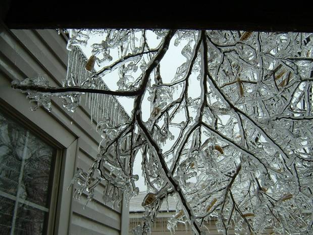 Almost 2 inches of ice on the trees.<br/><b>Community Photo By:</b> Teresa Mohler<br/><b>Submitted By:</b> Teresa, Midwest City