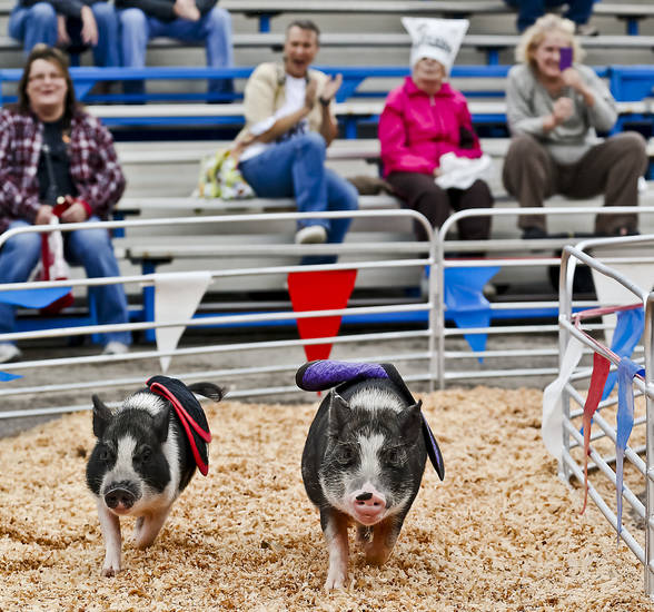 Fans cheer on the pigs during the pig races at the Oklahoma State Fair at State Fair Park on Friday, Sept. 14, 2012, in Oklahoma City, Oklahoma.  Photo by Chris Landsberger, The Oklahoman