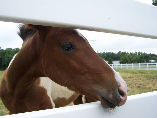 A young colt takes a peek through the fence at the SNU stables in Bethany.<br/><b>Community Photo By:</b> Cindi Tennison<br/><b>Submitted By:</b> Cindi , Bethany