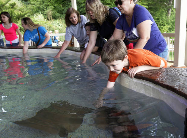 CHILD / CHILDREN / KIDS: Rylan Lathrop (6) of Houston, Texas leans over to pet a sting ray at the Oklahoma City Zoo's newest Sting Ray Bay exhibit on Tuesday, July 16, 2013. Photo by Aliki Dyer/ The Oklahoman