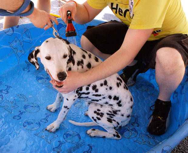 Sasha, a 10-year old Dalmatian that belongs to Aaron Wierenga, sits patiently in a wading pool as she is given a bath by volunteers. A dog wash fundraiser sponsored by a network of animal rescue organizations. Saturday afternoon, May 21, 2011, at a northwest Oklahoma City shopping center at May Avenue and Britton Road.   Photo by Jim Beckel, The Oklahoman