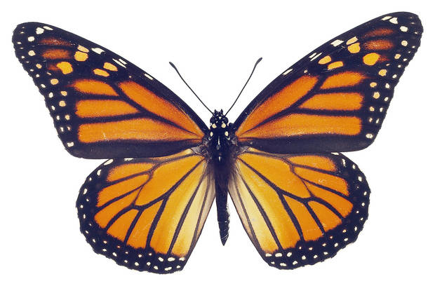Monarch. Oklahoman archives