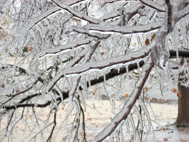 Next door neighbor's redbud covered in ice<br/><b>Community Photo By:</b> Leonard Sparks<br/><b>Submitted By:</b> Leonard, Midwest City