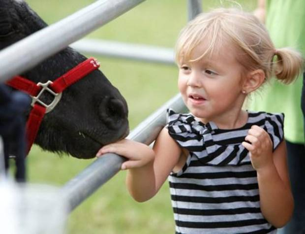 Allexady Clark, 3, isn't sure what to think as a pony nuzzles her hand during Septemberfest at the governor's mansion in Oklahoma City, OK, Saturday, Sept. 11, 2010. By Paul Hellstern, The Oklahoman