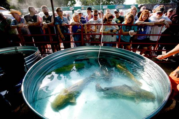 Fans watch catfish swim in tanks after their during the Okie Noodling Tournament in Pauls Valley, Okla., Saturday, July 11, 2009. Photo by Bryan Terry, The Oklahoman