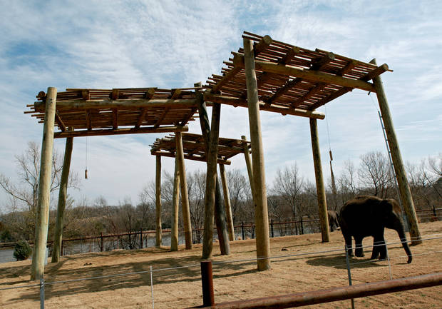 Asha (right) and Chandra (background) walk around in the elephant habitat at the Oklahoma City Zoo in Oklahoma City on Thursday, March. 3, 2011. Photo by John Clanton, The Oklahoman