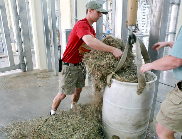 Nick Newby, Pachyderm Supervisor at the Oklahoma City Zoo, puts food into a feeder for Asha at the new Elephant Exhibit on Tuesday, April 5, 2011. Asha, who's due date is getting closer, will give birth in this enclosure inside the new Elephant Exhibit at the Zoo. Photo by John Clanton, The Oklahoman