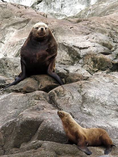 Steller sea lions rest on rocks on South Marble Island Southeast Alaska, Thursday, June 7, 2012.  Photo by Sarah Phipps, The Oklahoman