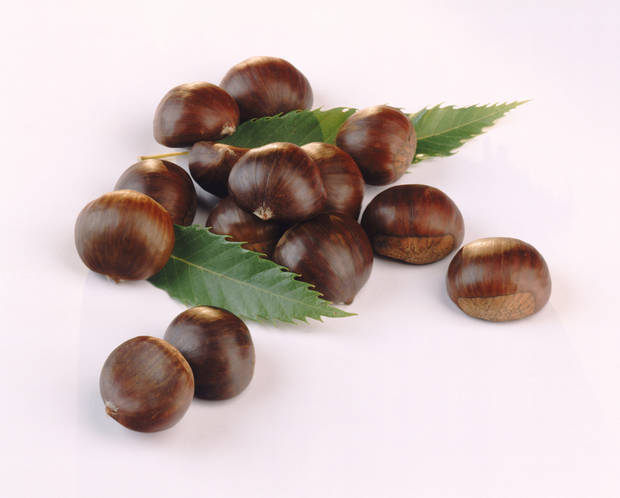 Chestnut with leaves on white background, close-up