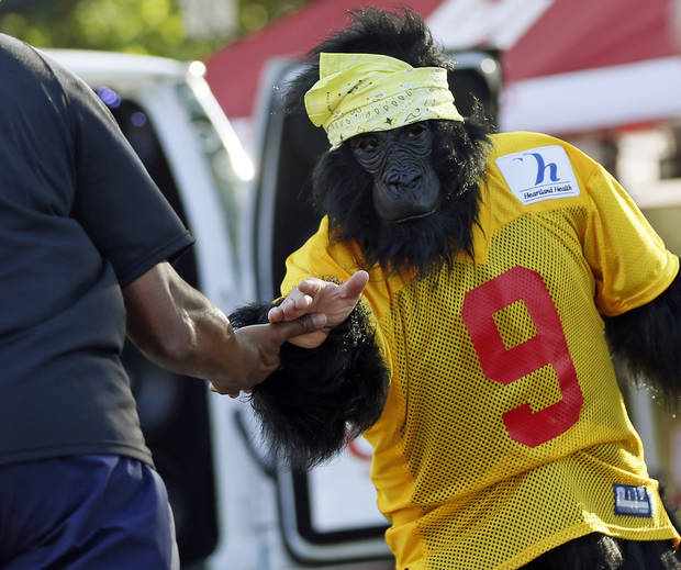 Reed Hammond wears a gorilla costume as he encourages runners at the top of Gorilla Hill near NW40th and Shartel Ave. during the Oklahoma City Memorial Marathon in Oklahoma City, Sunday, April 28, 2013. Photo by Nate Billings, The Oklahoman