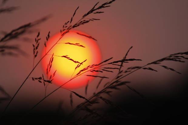 Tall grass is silhouetted against the setting sun along 33rd street in Edmond near Coltrane Tuesday, Sept. 1, 2009. Photo by Doug Hoke, The Oklahoman.
