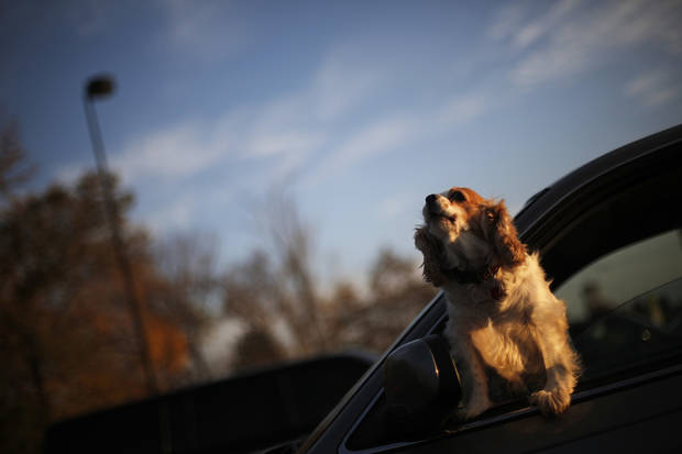 A dog sticks its head out of a car window and barks in a parking lot in Edmond, Monday, Nov. 19, 2012.  Photo by Garett Fisbeck, The Oklahoman